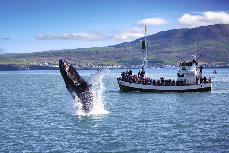 The unique experience of whale watching in Iceland